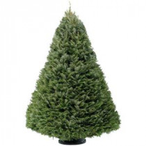 6 ft. - 7 ft. Fresh-Cut Grand Fir Christmas Tree (In-Store Only)