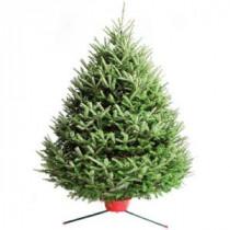 5.5 ft. Fresh-Cut Fraser Fir Christmas Tree (In-Store Only)