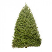 6 ft. - 8 ft. Fresh-Cut Douglas Fir Christmas Tree (In-Store Only)
